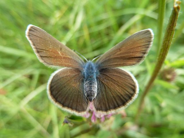 identification papillons P1020657