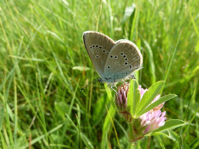 identification papillons P1020661