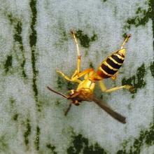 Bộ sưu tập côn trùng 2 - Page 14 1537375398