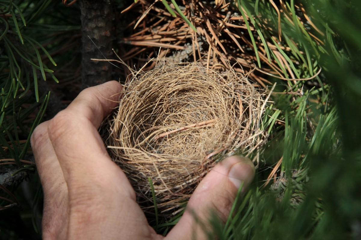 Un oiseau et SON nid ? IMG_8231-e1367361796302