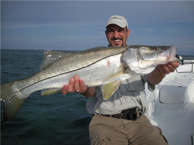 La Pesca del Róbalo (Centropomus sp.) por José Manuel López Pinto / Actualizado a 03 de Noviembre del 2013 Snook_fishing_florida
