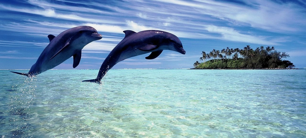 Anniversaire Flashy Photos-de-dauphins