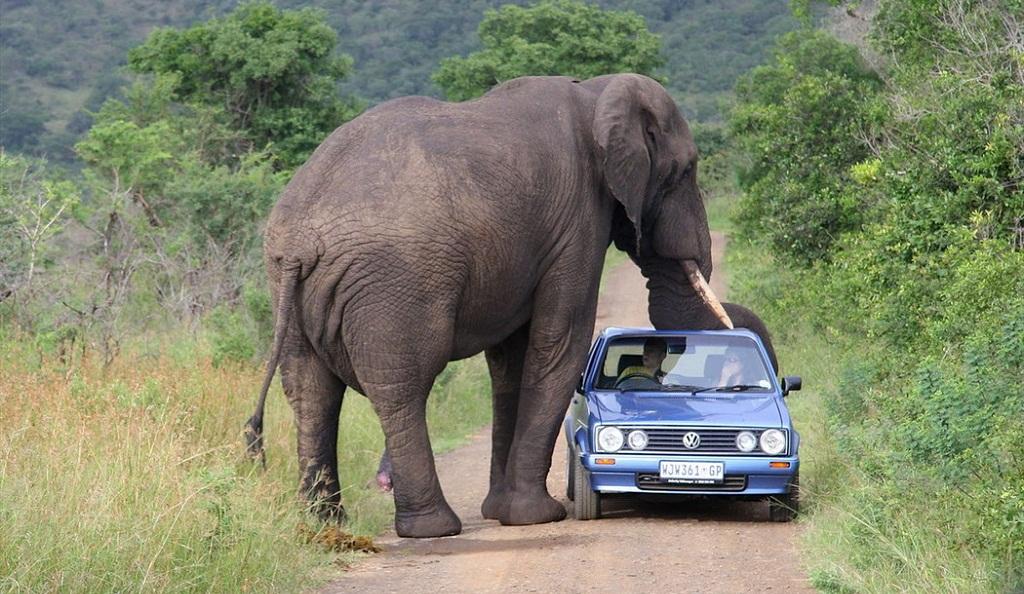 humor graficos,caricaturas,fotos curiosas Elefante-coche
