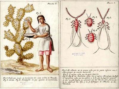 2. Técnicas y medios de la pintura y el dibujo Dactylopius-coccus-costa-cochinilla-colorante