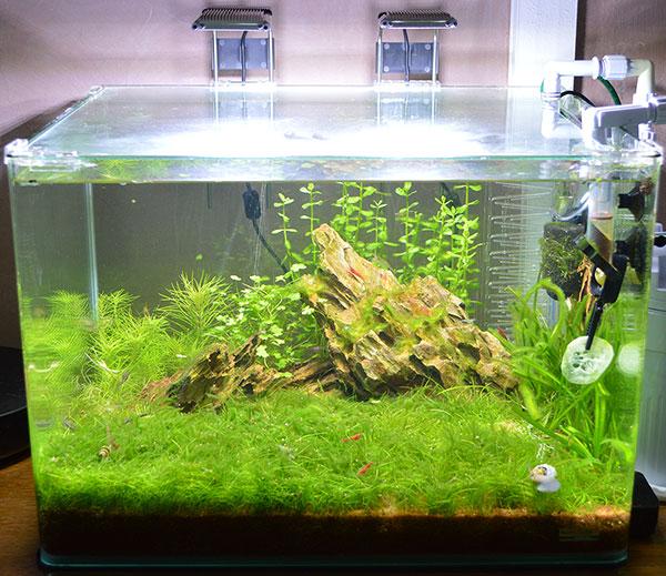 Nouvel aquarium Scaper's Tank 50 L 2014_juillet_17_b_PM