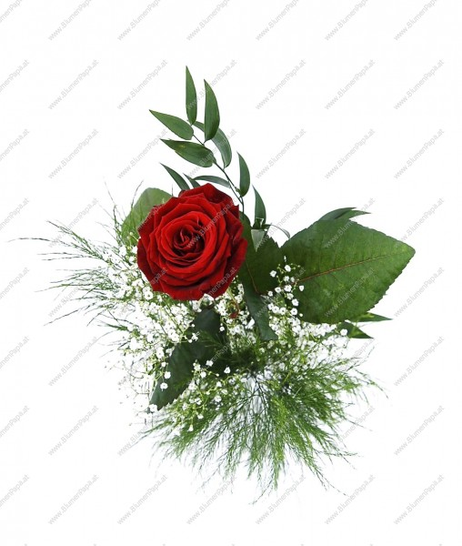 Trendafila - Faqe 12 17818b05e43227-rote-Rose