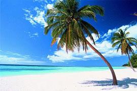 Regalitos para los ángeles Palme_spiaggia_ridotta