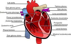 Posty naszych czytelników - Page 4 Thumb_serce-opracowa-dr-tomasz-kozowski