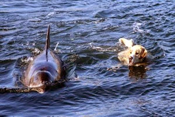 Every Day, A Dolphin Comes To Shore To Take His Dog For A Swim. Incredible. Fhadhhdsf