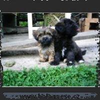 Tsvetnaya Bolonka 041004-_small