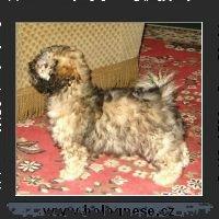 Tsvetnaya Bolonka 050221-Antik-_small