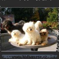 Tsvetnaya Bolonka 051004-_small