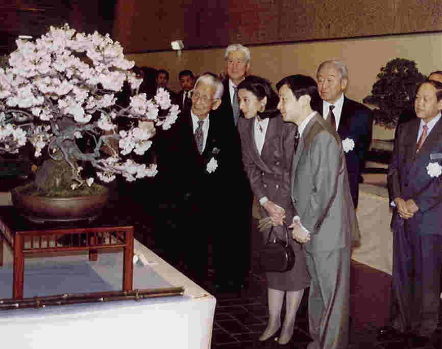 Flowering cherry bonsai at Kokufu Kokufu