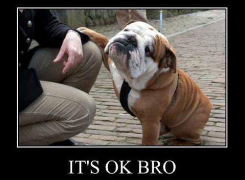 The road to the Superbowl runs straight through Foxborough It-is-ok-bro-bulldog