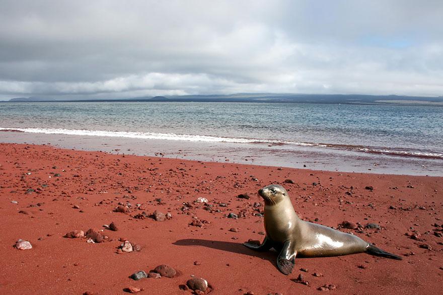17 Of The Most Unusual Beaches Around The World Amazing-unusual-beaches-10-1