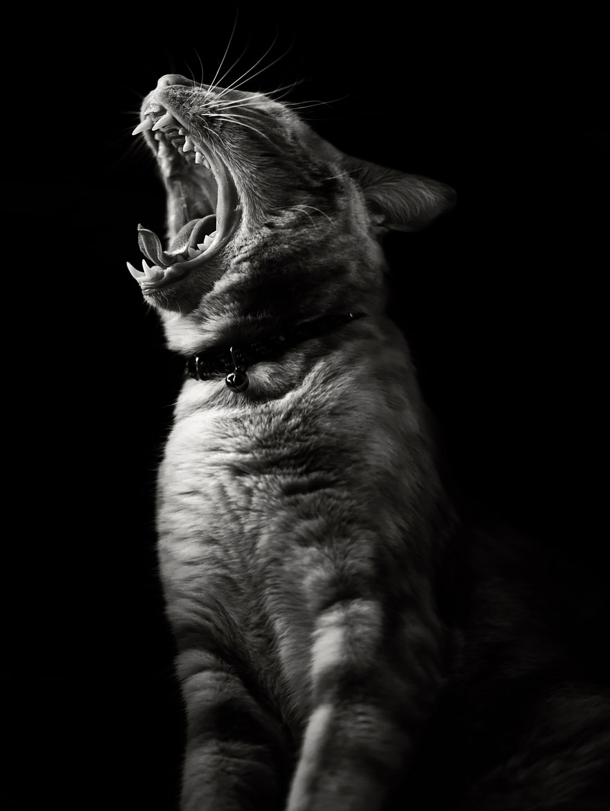 Chat alors! - Page 18 Cat-looking-at-you-black-and-white-photography-1011