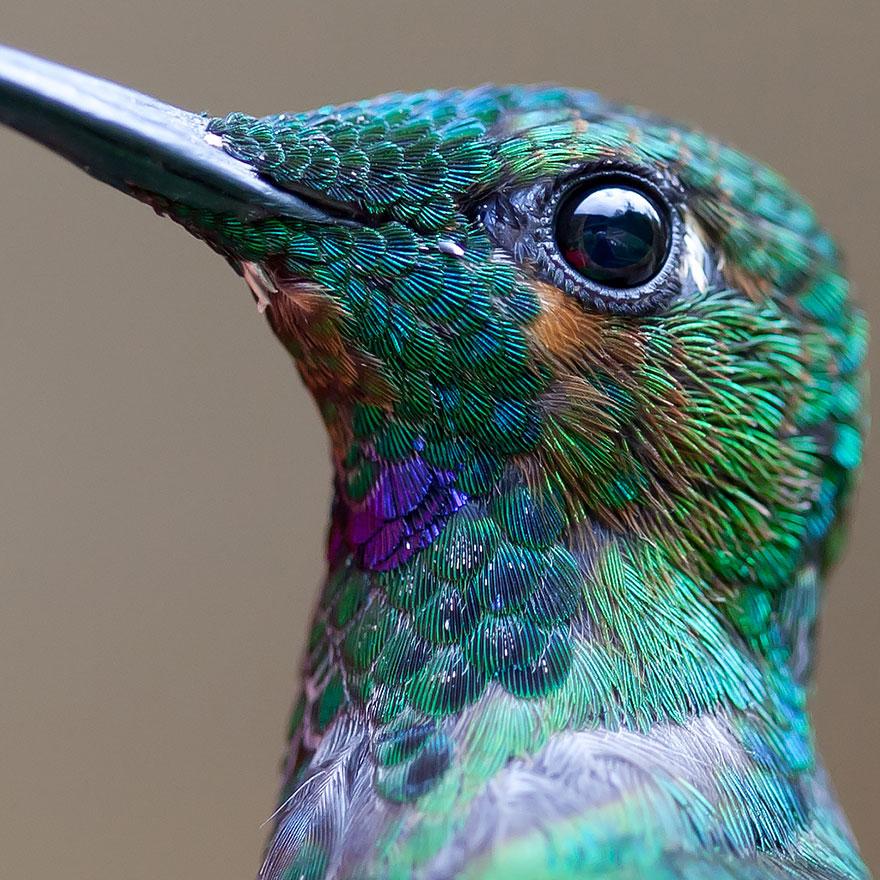 Hummingbird Cute-beautiful-hummingbird-photography-1