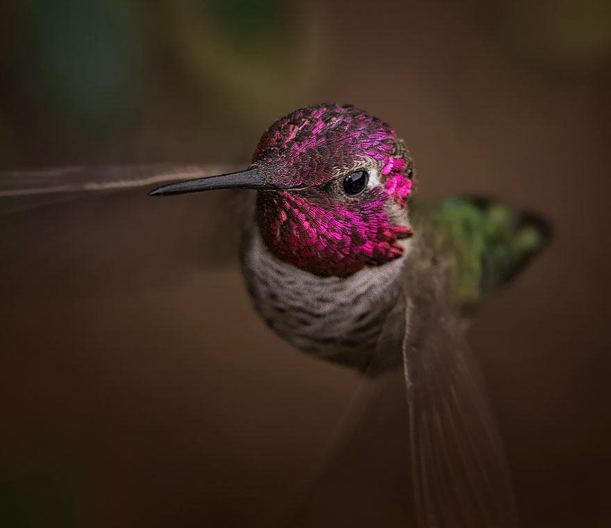 Hummingbird Cute-beautiful-hummingbird-photography-10