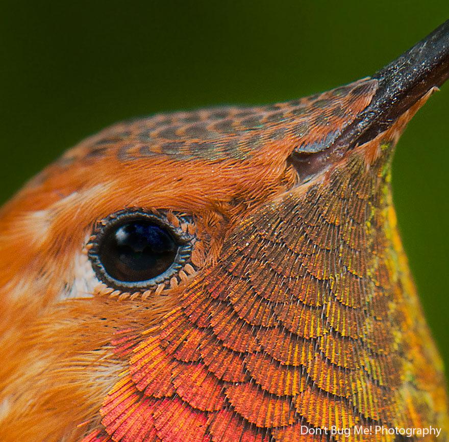 Hummingbird Cute-beautiful-hummingbird-photography-111