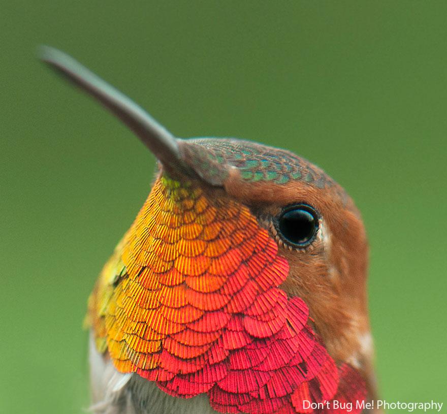 Hummingbird Cute-beautiful-hummingbird-photography-121