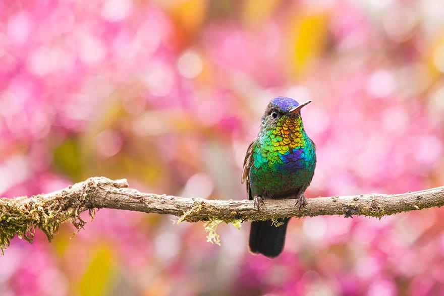 Hummingbird Cute-beautiful-hummingbird-photography-17