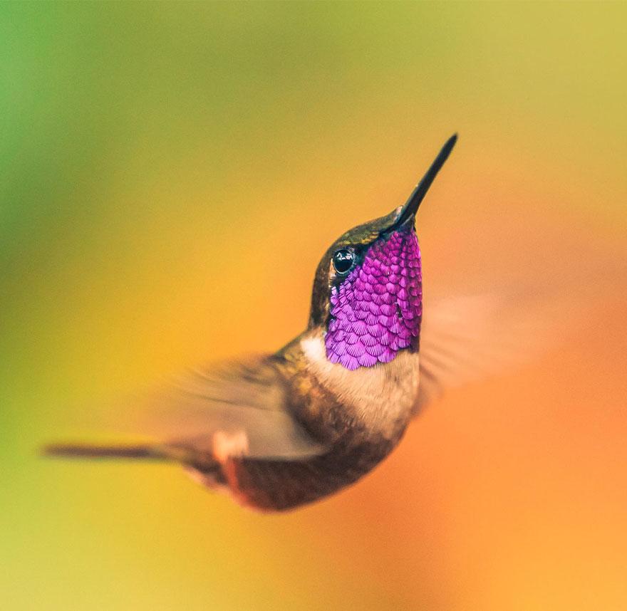 Hummingbird Cute-beautiful-hummingbird-photography-20