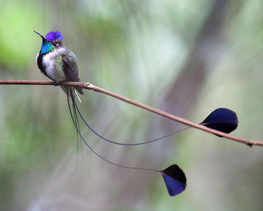 Hummingbird Cute-beautiful-hummingbird-photography-3