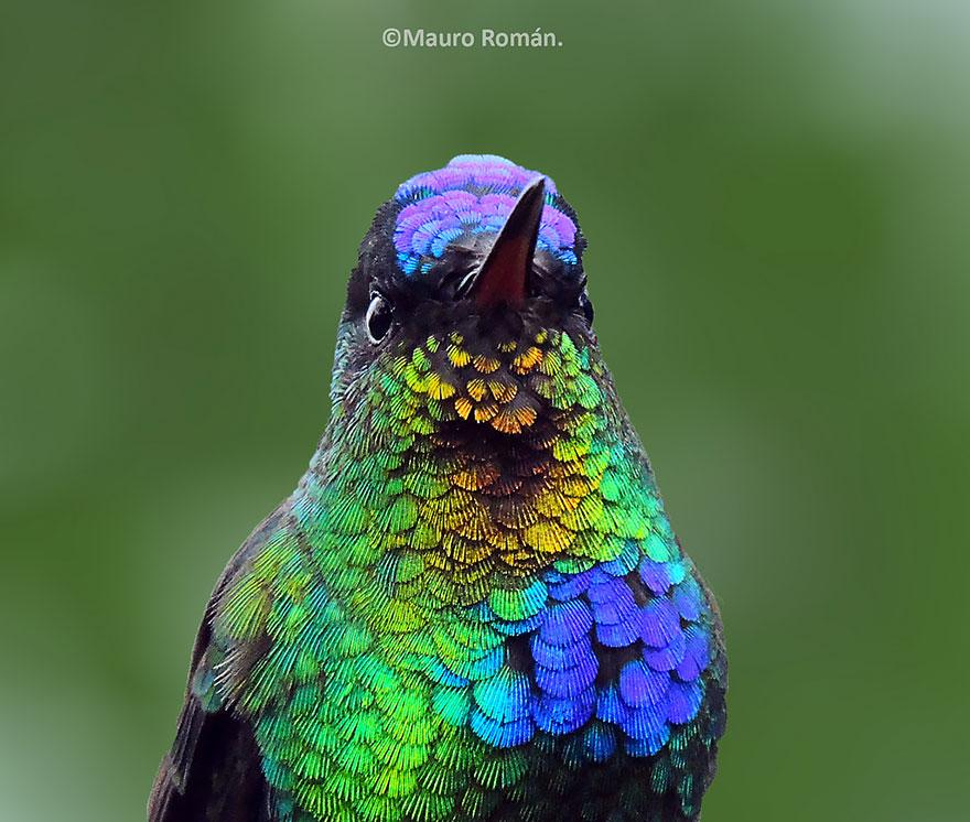 Hummingbird Cute-beautiful-hummingbird-photography-4