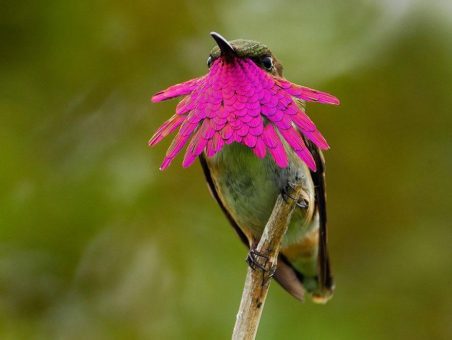 Hummingbird Cute-beautiful-hummingbird-photography-5