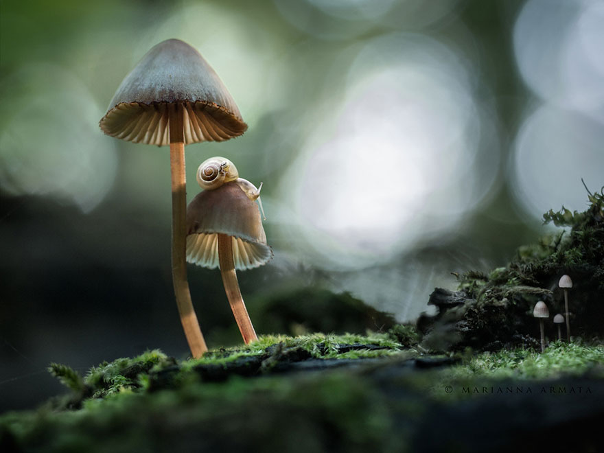 25 Stunning Photos within the Mystical World of Mushrooms  Interesting-mushroom-photography-771__880