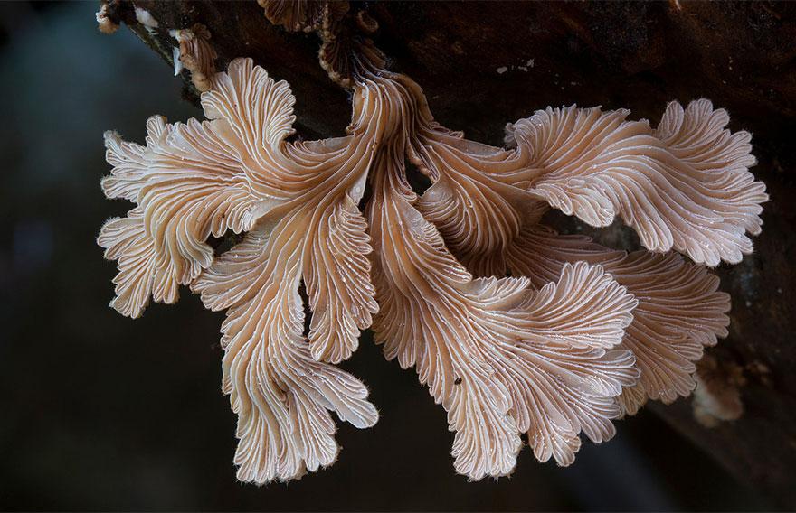 25 Stunning Photos within the Mystical World of Mushrooms  Interesting-mushroom-photography-82__880