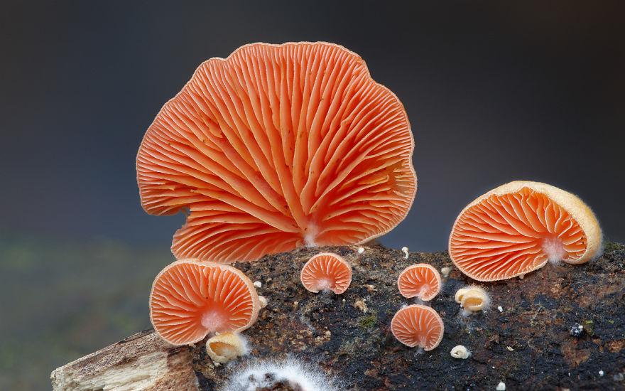 25 Stunning Photos within the Mystical World of Mushrooms  Interesting-mushroom-photography-88__880