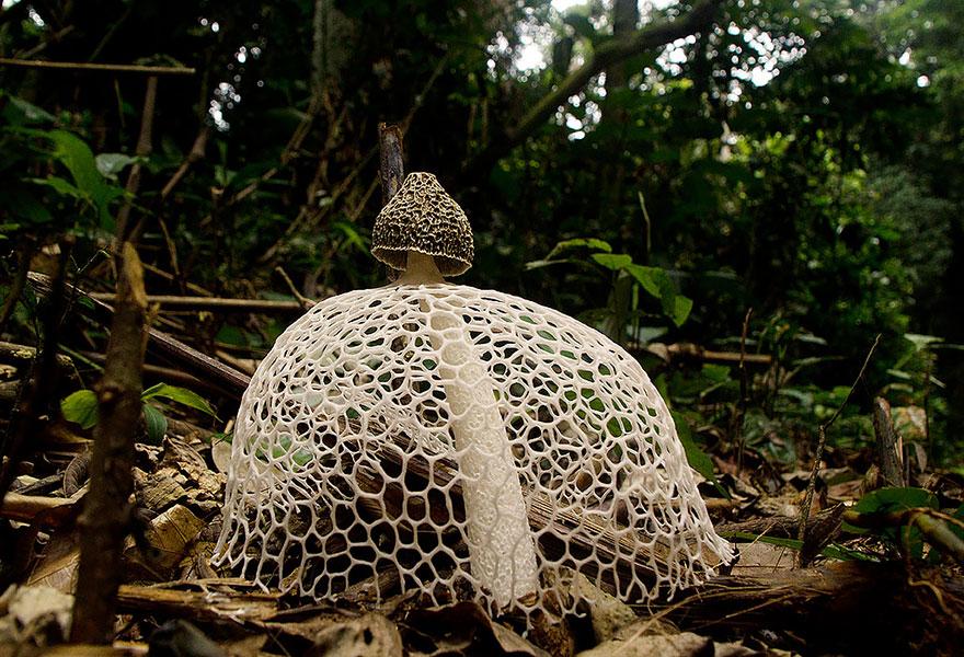 25 Stunning Photos within the Mystical World of Mushrooms  Mushroom-photography-101__880