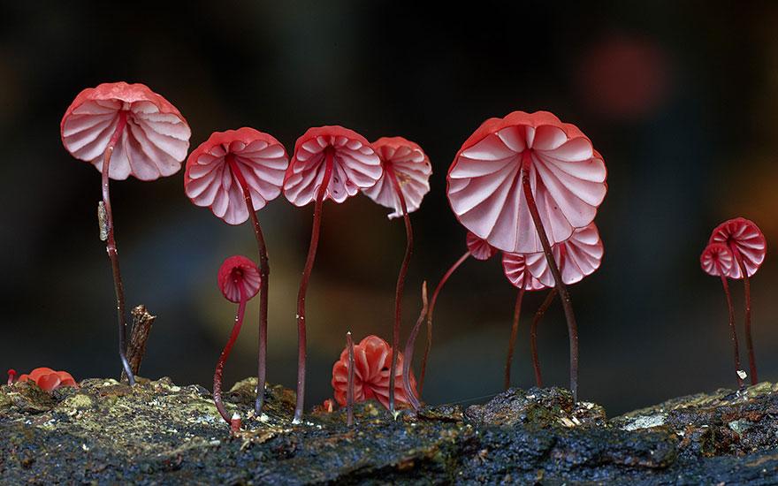 25 Stunning Photos within the Mystical World of Mushrooms  Mushroom-photography-110__880