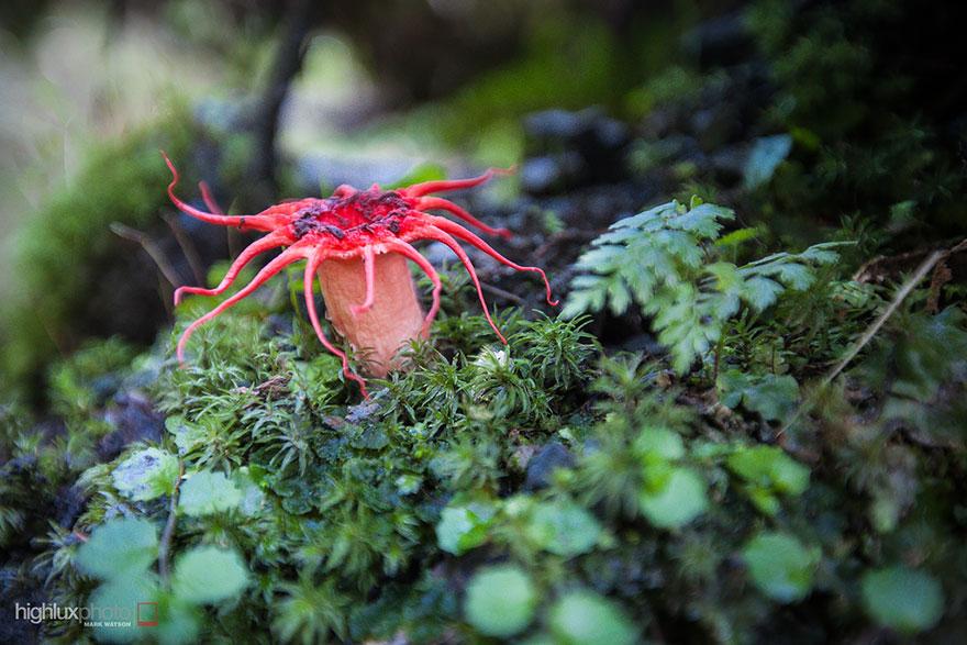 25 Stunning Photos within the Mystical World of Mushrooms  Mushroom-photography-161__880