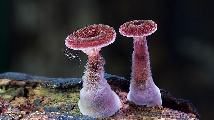 25 Stunning Photos within the Mystical World of Mushrooms  Mushroom-photography-171__880