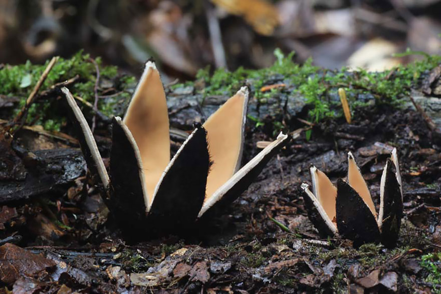 25 Stunning Photos within the Mystical World of Mushrooms  Mushroom-photography-181__880