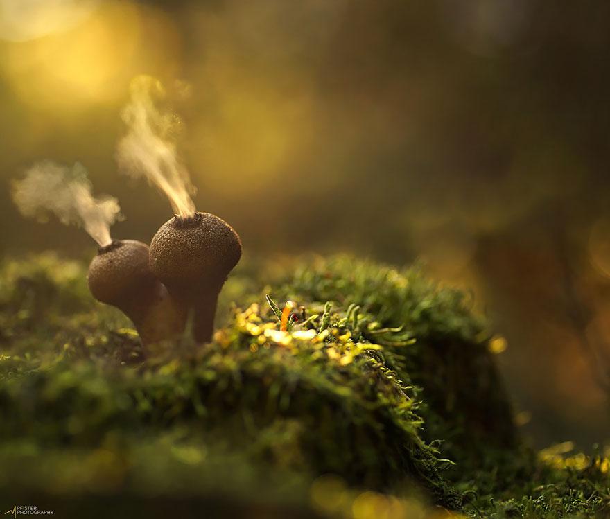 25 Stunning Photos within the Mystical World of Mushrooms  Mushroom-photography-302__880