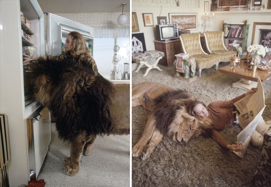 Et si au lieu d'un chat vous aviez un lion Pet-lion-neil-film-michael-rougier-14