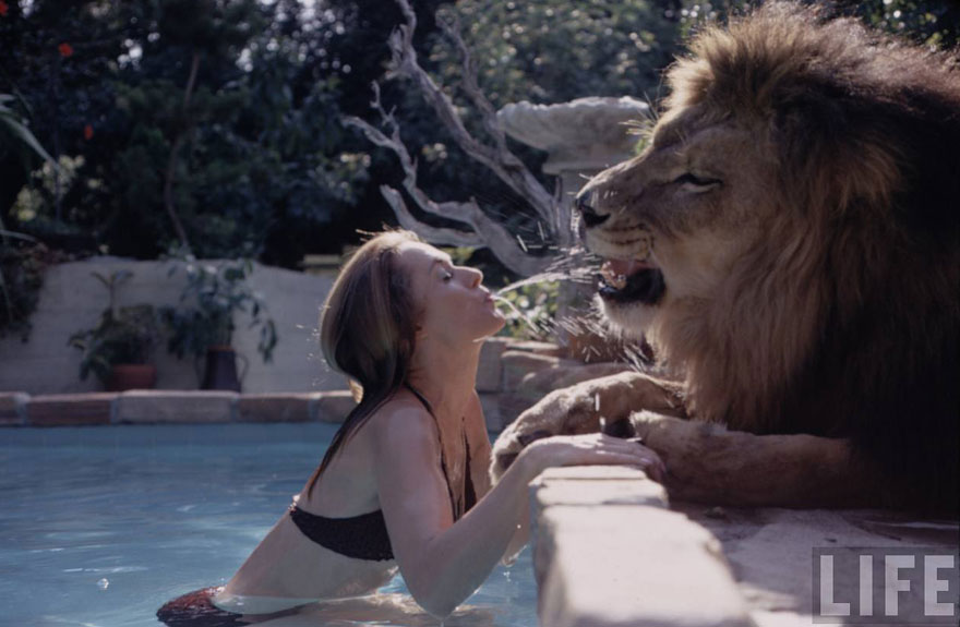 Et si au lieu d'un chat vous aviez un lion Pet-lion-neil-film-michael-rougier-2