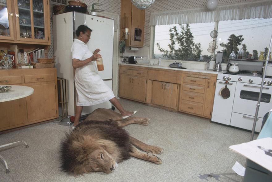 Et si au lieu d'un chat vous aviez un lion Pet-lion-neil-film-michael-rougier-3