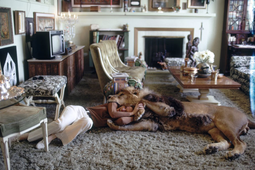 Et si au lieu d'un chat vous aviez un lion Pet-lion-neil-film-michael-rougier-6