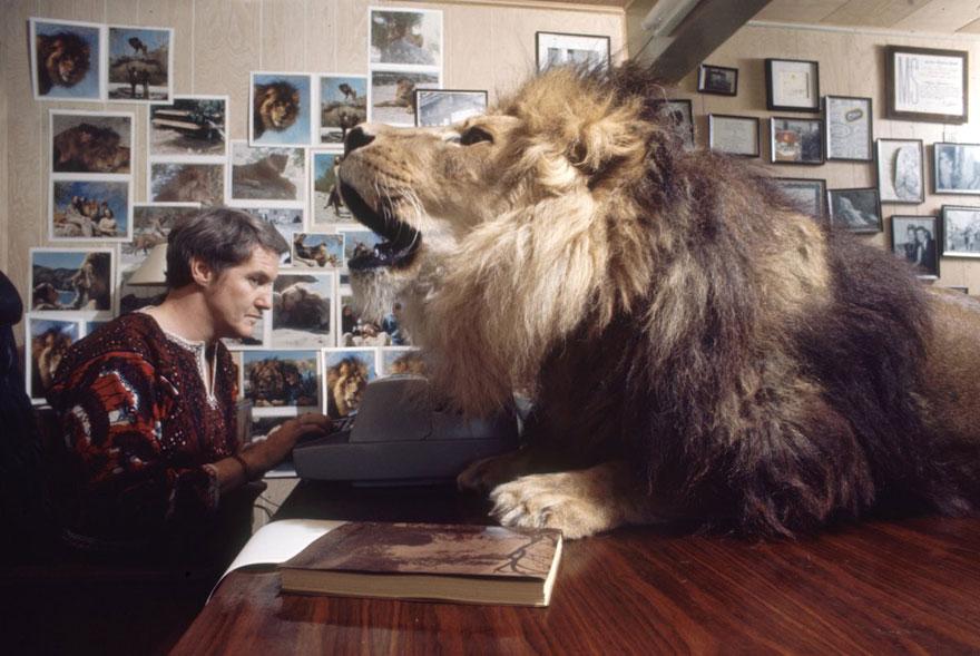 Et si au lieu d'un chat vous aviez un lion Pet-lion-neil-film-michael-rougier-7