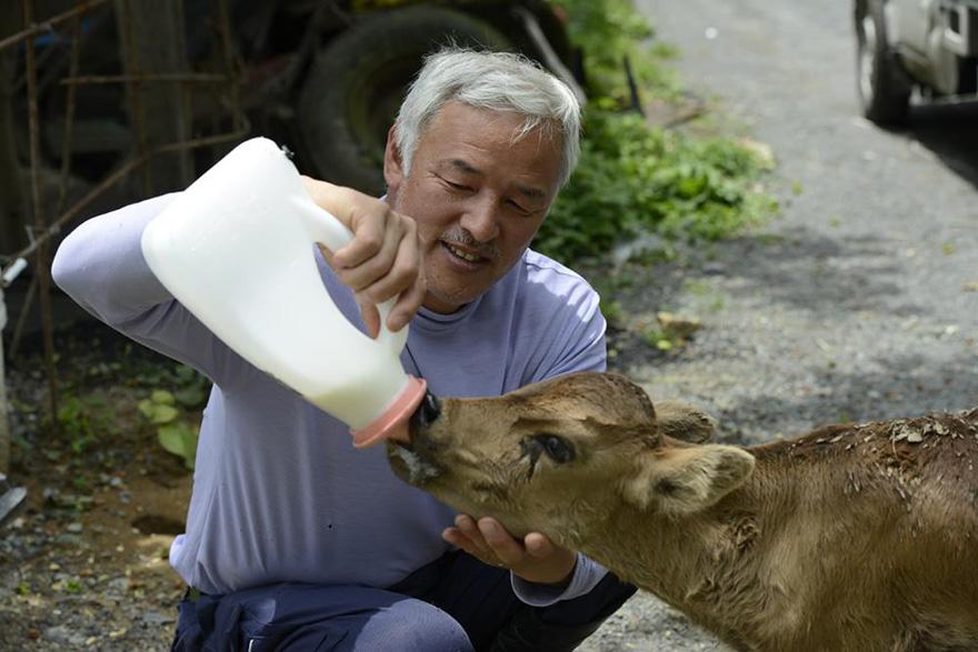 para - Qué hacer ante un caso de maltrato animal Guardian-fukushima-abandoned-animals-naoto-matsumura-1