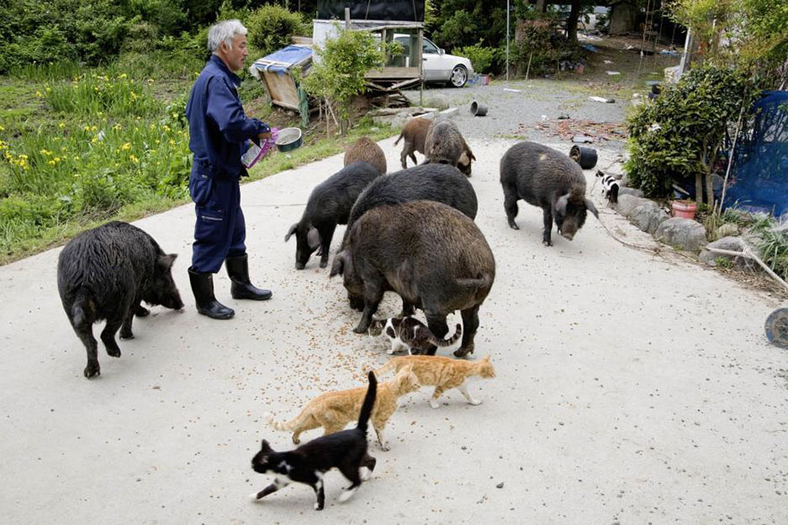 para - Qué hacer ante un caso de maltrato animal Guardian-fukushima-abandoned-animals-naoto-matsumura-10