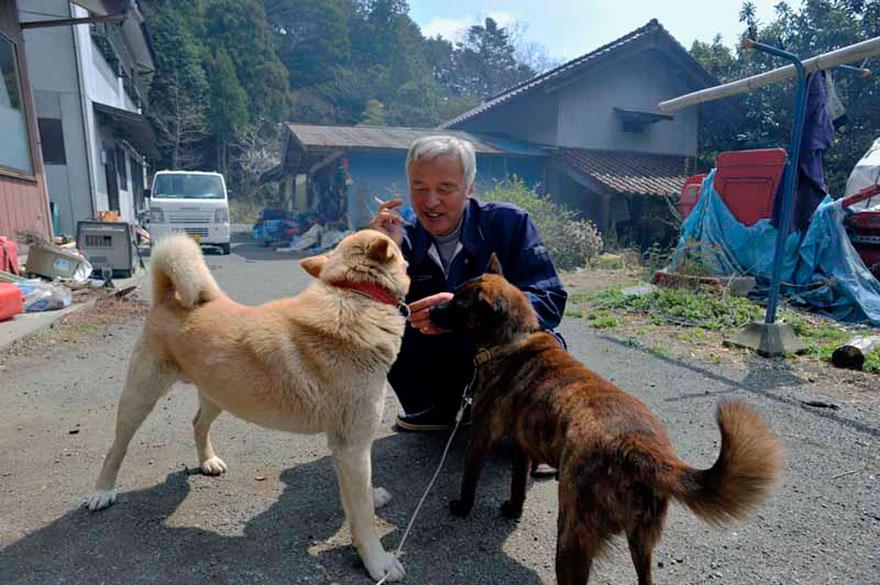 para - Qué hacer ante un caso de maltrato animal Guardian-fukushima-abandoned-animals-naoto-matsumura-12