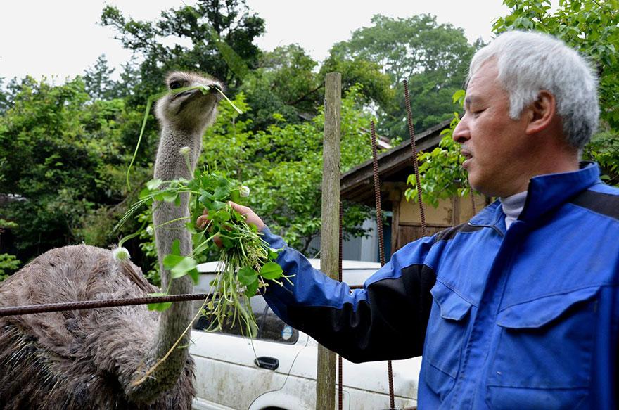 para - Qué hacer ante un caso de maltrato animal Guardian-fukushima-abandoned-animals-naoto-matsumura-5