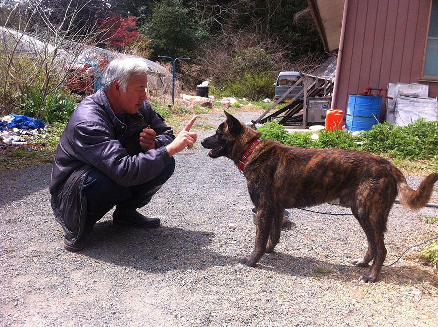 para - Qué hacer ante un caso de maltrato animal Guardian-fukushima-abandoned-animals-naoto-matsumura-6