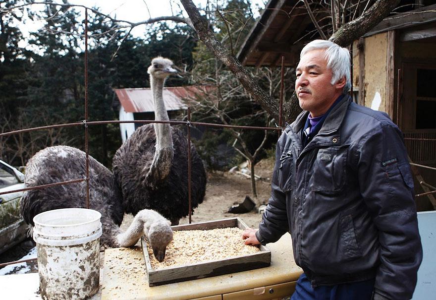 para - Qué hacer ante un caso de maltrato animal Guardian-fukushima-abandoned-animals-naoto-matsumura-7