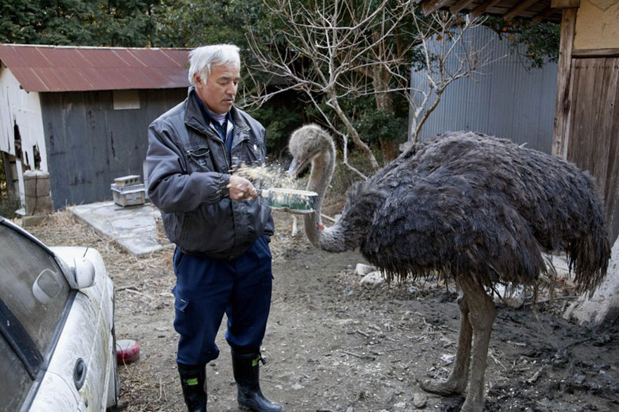 para - Qué hacer ante un caso de maltrato animal Guardian-fukushima-abandoned-animals-naoto-matsumura-8